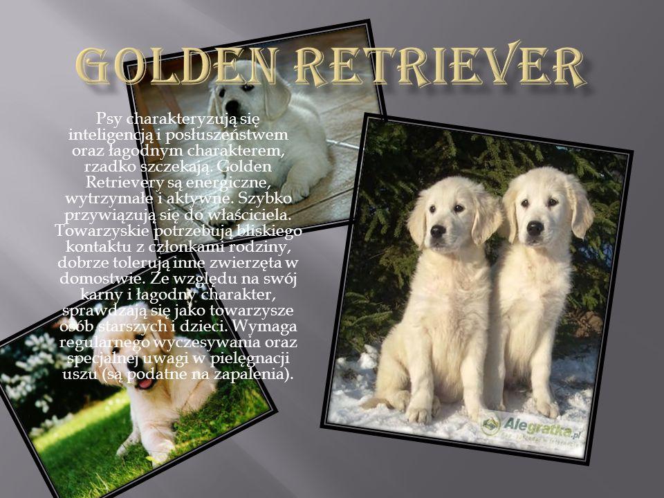 Psy charakteryzują się inteligencją i posłuszeństwem oraz łagodnym charakterem, rzadko szczekają. Golden Retrievery są energiczne, wytrzymałe i aktywn