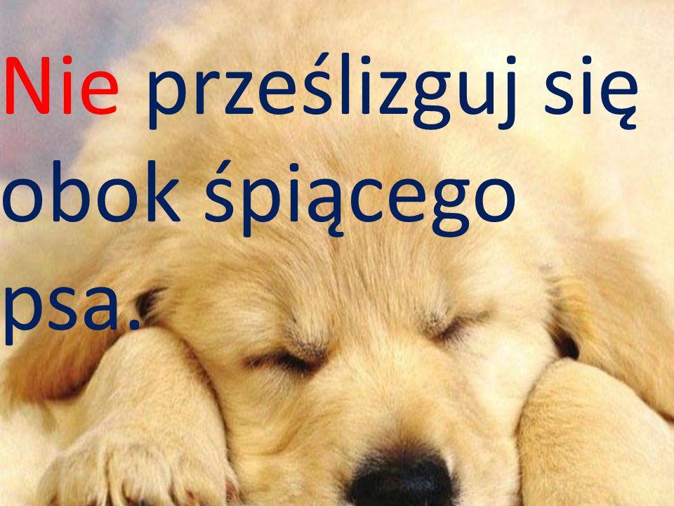Nie wolno drażnić psa za płotem.