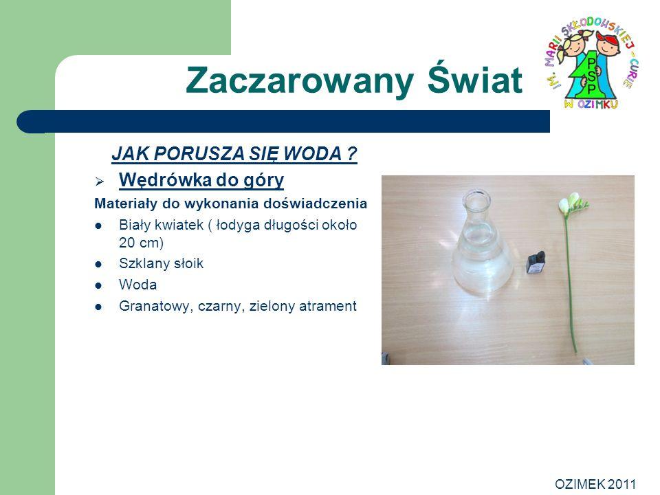 OZIMEK 2011 Zaczarowany Świat JAK PORUSZA SIĘ WODA ? Wędrówka do góry Materiały do wykonania doświadczenia Biały kwiatek ( łodyga długości około 20 cm