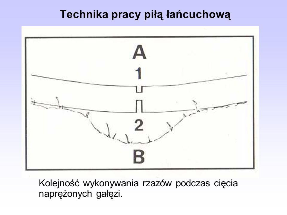 Kolejność wykonywania rzazów podczas cięcia naprężonych gałęzi. Technika pracy piłą łańcuchową