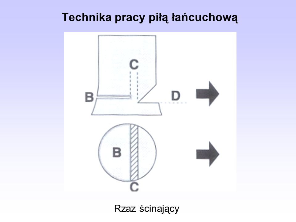 Rzaz ścinający Technika pracy piłą łańcuchową