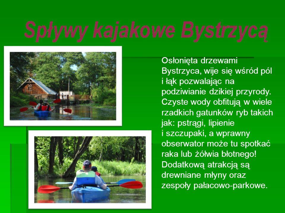 Osłonięta drzewami Bystrzyca, wije się wśród pól i łąk pozwalając na podziwianie dzikiej przyrody. Czyste wody obfitują w wiele rzadkich gatunków ryb