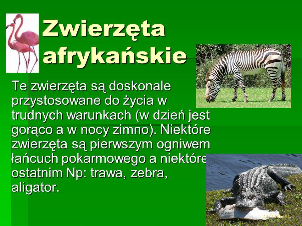 Zwierzęta afrykańskie Te zwierzęta są doskonale przystosowane do życia w trudnych warunkach (w dzień jest gorąco a w nocy zimno). Niektóre zwierzęta s