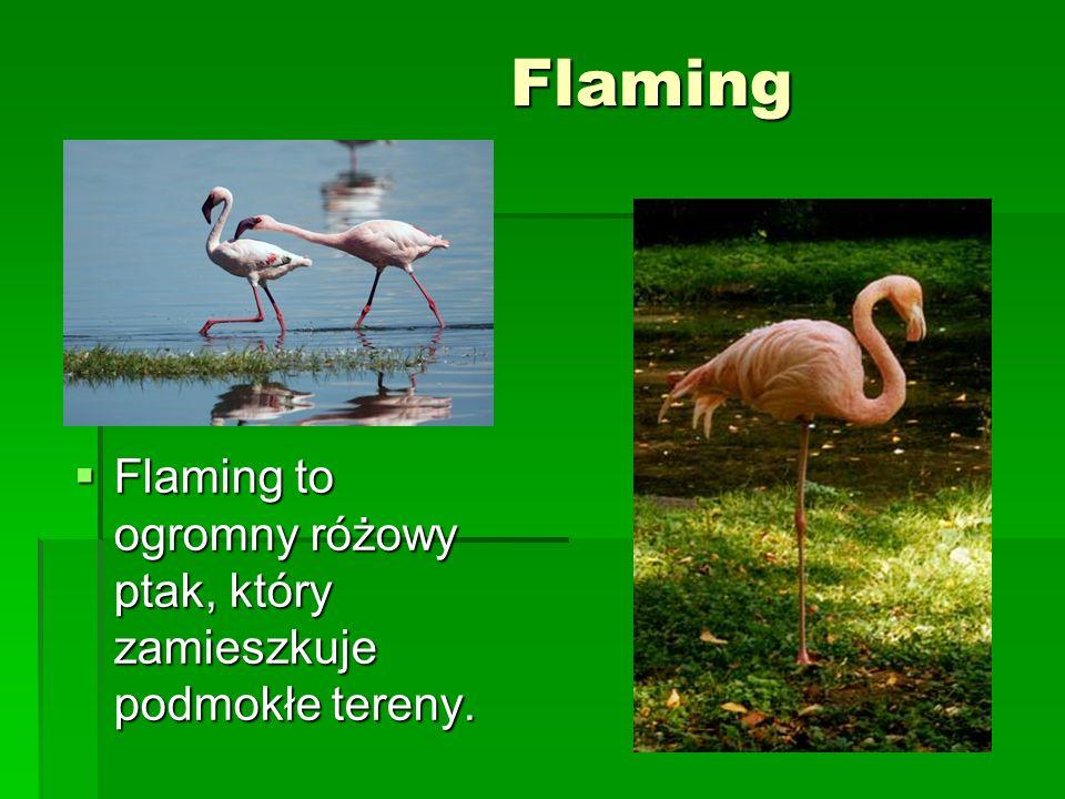 Flaming Flaming to ogromny różowy ptak, który zamieszkuje podmokłe tereny. Flaming to ogromny różowy ptak, który zamieszkuje podmokłe tereny.