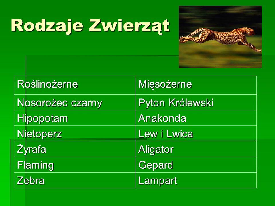 Rodzaje Zwierząt RoślinożerneMięsożerne Nosorożec czarny Pyton Królewski HipopotamAnakonda Nietoperz Lew i Lwica ŻyrafaAligator FlamingGepard ZebraLam