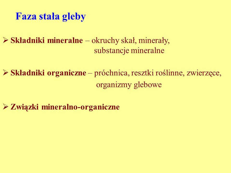 Faza stała gleby Składniki mineralne – okruchy skał, minerały, substancje mineralne Składniki organiczne – próchnica, resztki roślinne, zwierzęce, organizmy glebowe Związki mineralno-organiczne