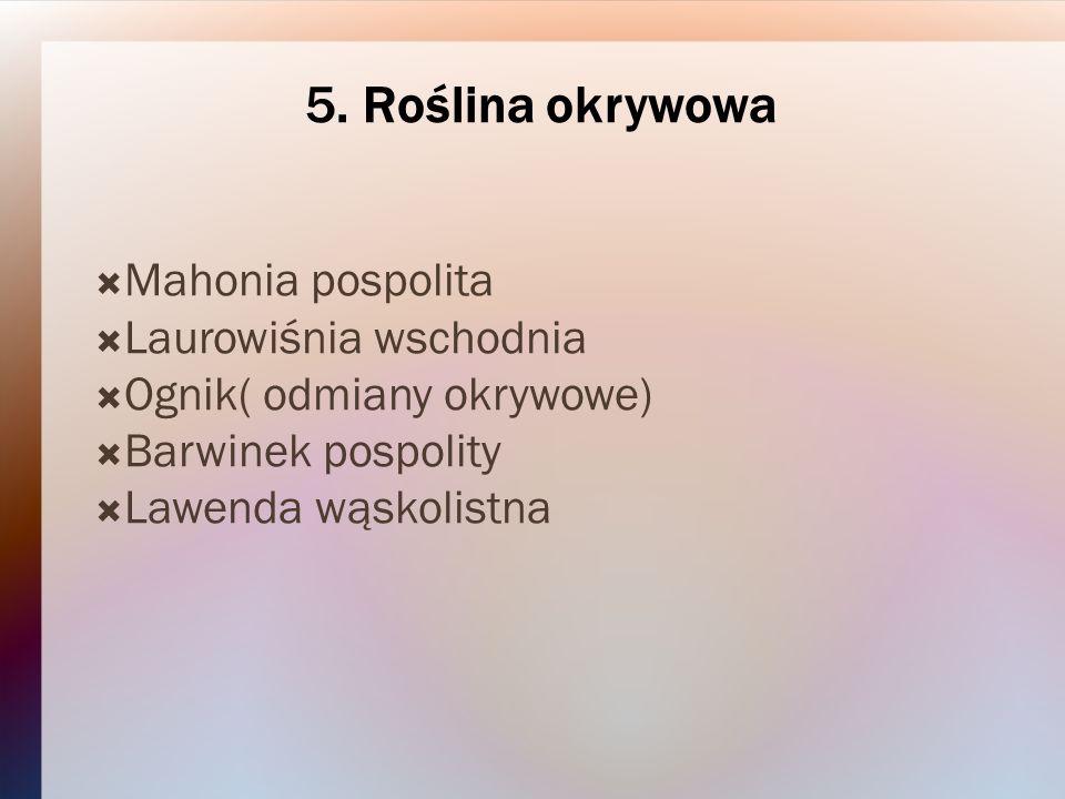 5. Roślina okrywowa Mahonia pospolita Laurowiśnia wschodnia Ognik( odmiany okrywowe) Barwinek pospolity Lawenda wąskolistna