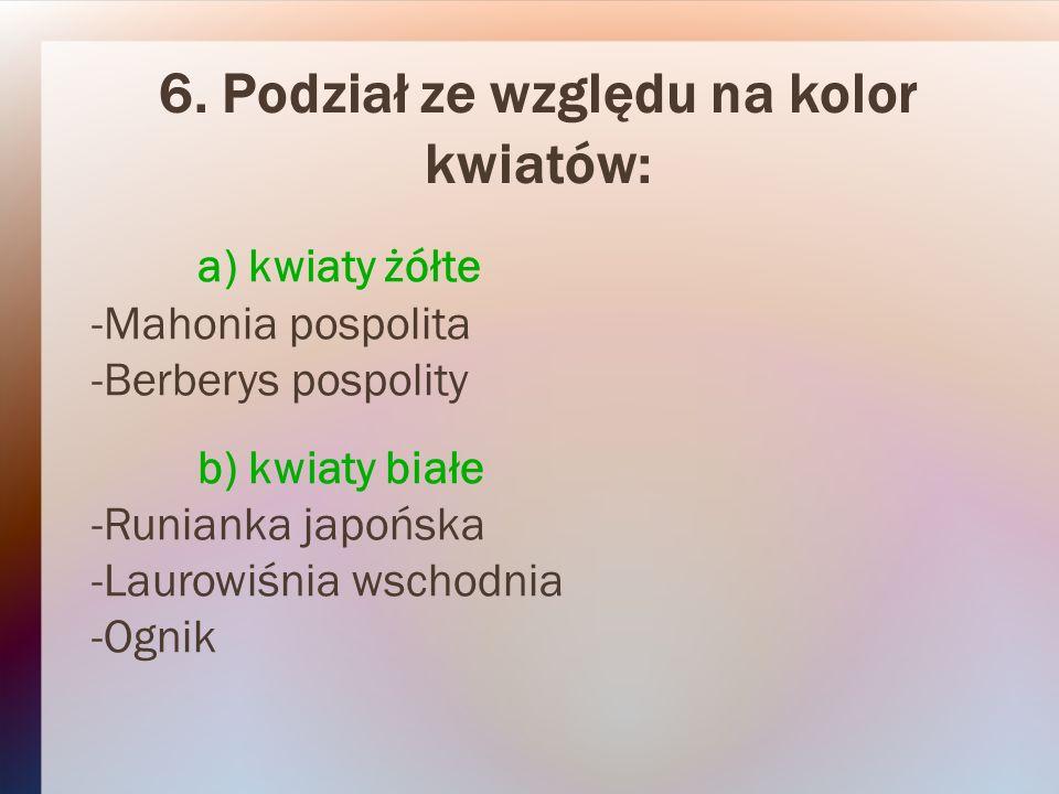 6. Podział ze względu na kolor kwiatów: a) kwiaty żółte -Mahonia pospolita -Berberys pospolity b) kwiaty białe -Runianka japońska -Laurowiśnia wschodn