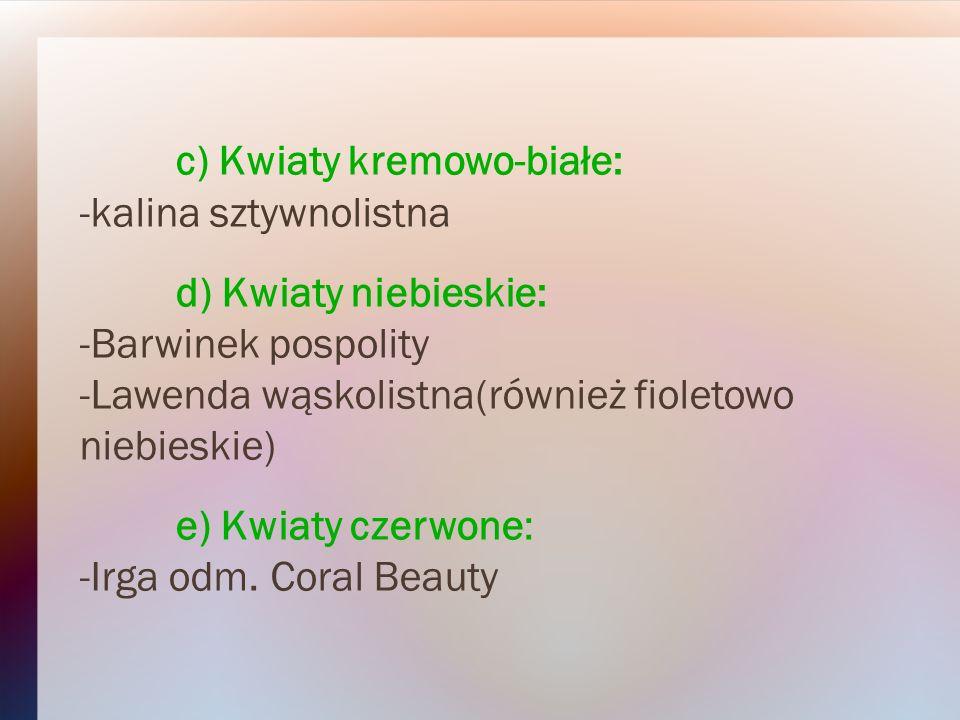 c) Kwiaty kremowo-białe: -kalina sztywnolistna d) Kwiaty niebieskie: -Barwinek pospolity -Lawenda wąskolistna(również fioletowo niebieskie) e) Kwiaty