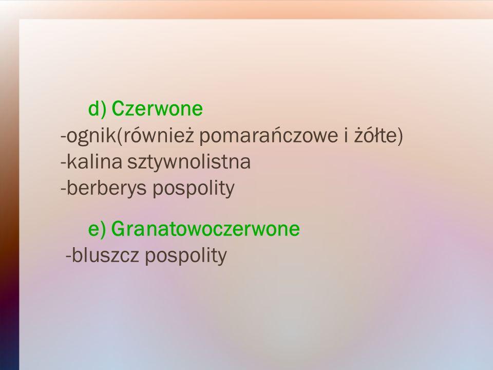 d) Czerwone -ognik(również pomarańczowe i żółte) -kalina sztywnolistna -berberys pospolity e) Granatowoczerwone -bluszcz pospolity