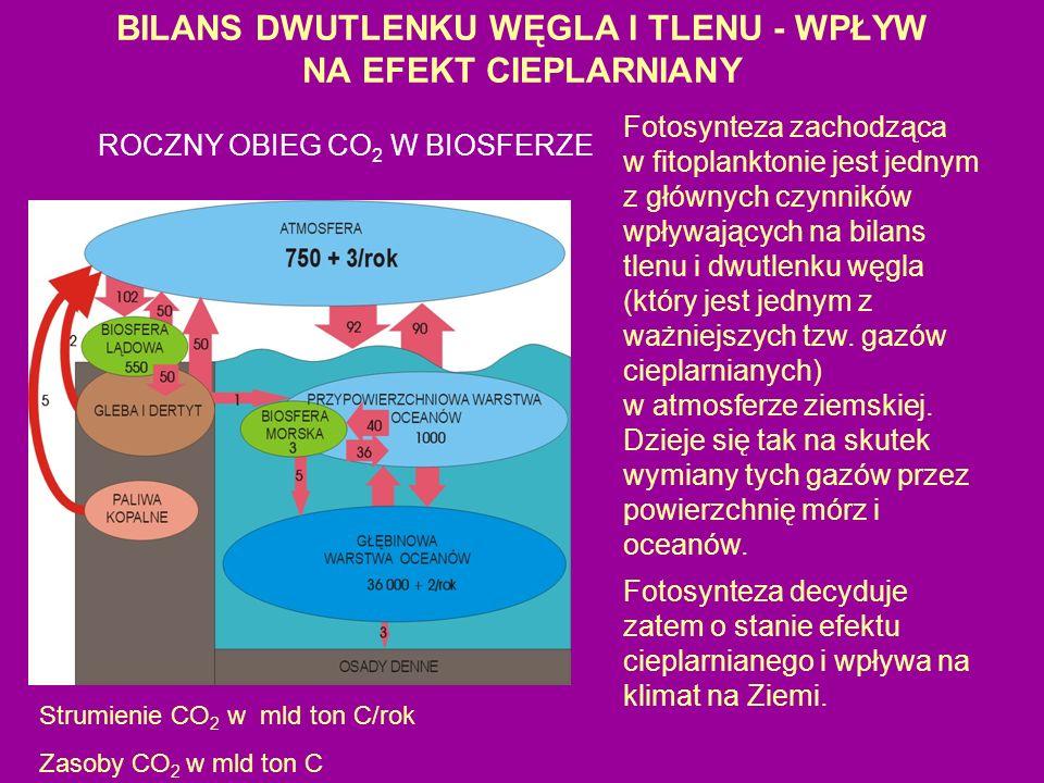 BILANS DWUTLENKU WĘGLA I TLENU - WPŁYW NA EFEKT CIEPLARNIANY Fotosynteza zachodząca w fitoplanktonie jest jednym z głównych czynników wpływających na bilans tlenu i dwutlenku węgla (który jest jednym z ważniejszych tzw.