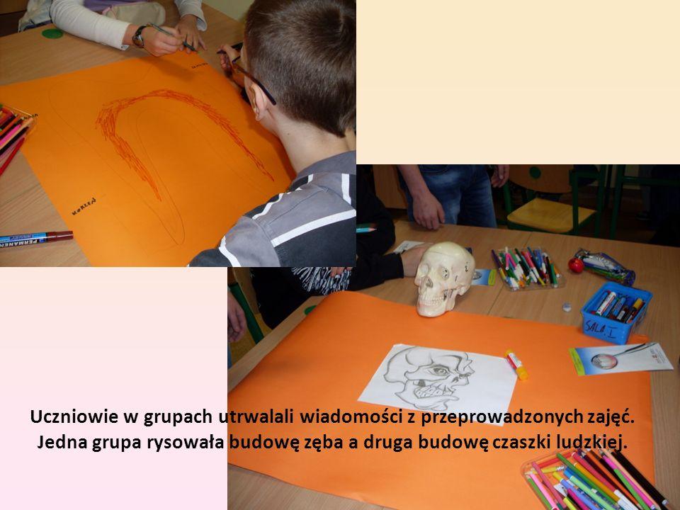 Uczniowie w grupach utrwalali wiadomości z przeprowadzonych zajęć. Jedna grupa rysowała budowę zęba a druga budowę czaszki ludzkiej.