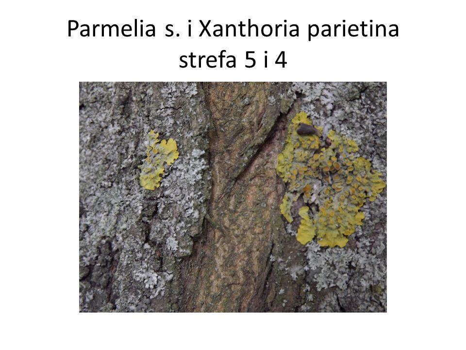 Parmelia s. i Xanthoria parietina strefa 5 i 4
