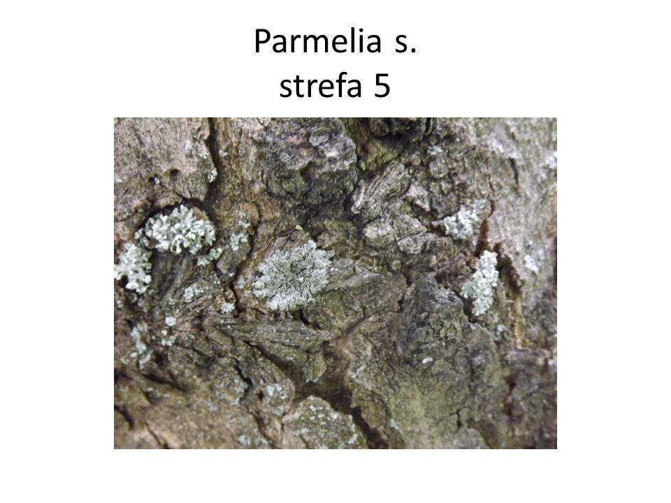 Parmelia s. strefa 5