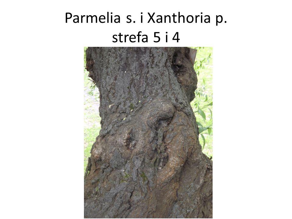 Parmelia s. i Xanthoria p. strefa 5 i 4