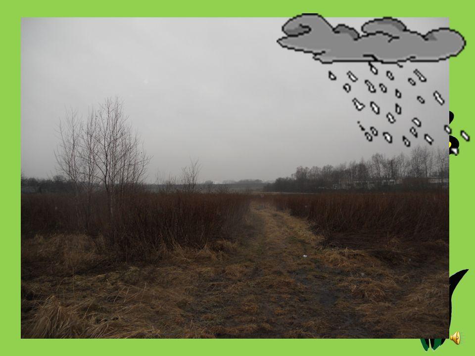 Dzień pierwszy. 13.03.2012 First day. Godzina: 7.35 Temperatura [ o C]: 6 Ciśnienie [hPa]: 1011,25 Stan pogody: zachmurzenie, mgła Wiatr [km/s]: 18 Op