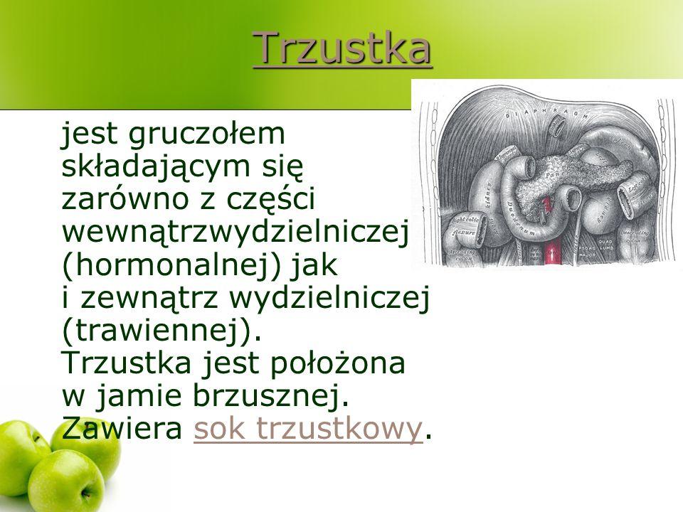 Trzustka jest gruczołem składającym się zarówno z części wewnątrzwydzielniczej (hormonalnej) jak i zewnątrz wydzielniczej (trawiennej). Trzustka jest