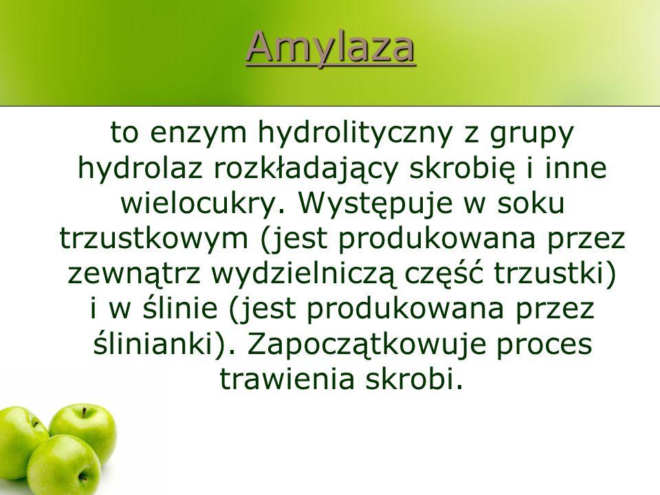 Amylaza to enzym hydrolityczny z grupy hydrolaz rozkładający skrobię i inne wielocukry. Występuje w soku trzustkowym (jest produkowana przez zewnątrz