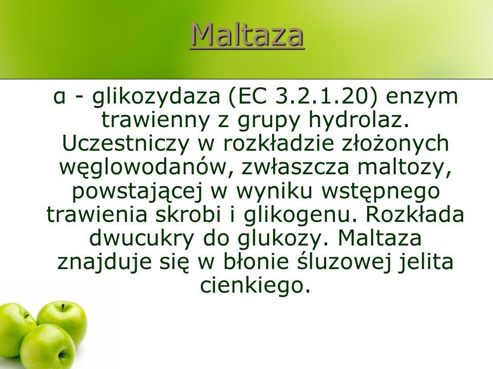 Maltaza α - glikozydaza (EC 3.2.1.20) enzym trawienny z grupy hydrolaz. Uczestniczy w rozkładzie złożonych węglowodanów, zwłaszcza maltozy, powstające