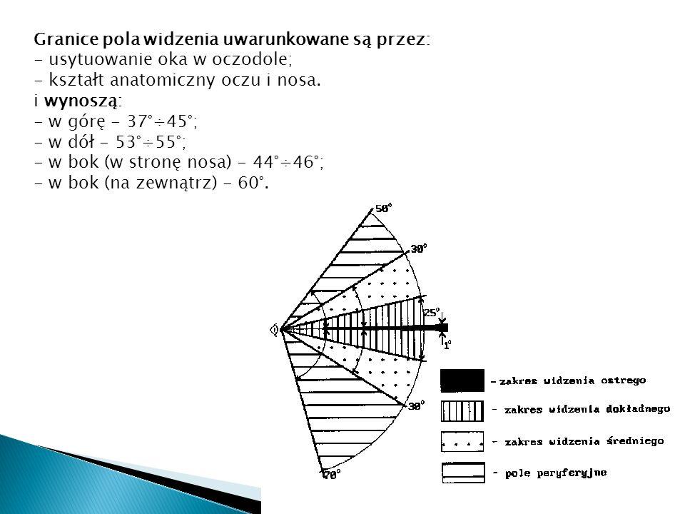 Granice pola widzenia uwarunkowane są przez: - usytuowanie oka w oczodole; - kształt anatomiczny oczu i nosa. i wynoszą: - w górę - 37°÷45°; - w dół -