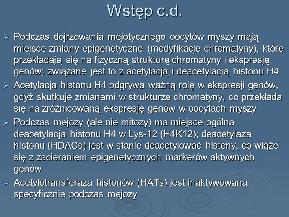 Wstęp c.d. Podczas dojrzewania mejotycznego oocytów myszy mają miejsce zmiany epigenetyczne (modyfikacje chromatyny), które przekładają się na fizyczn