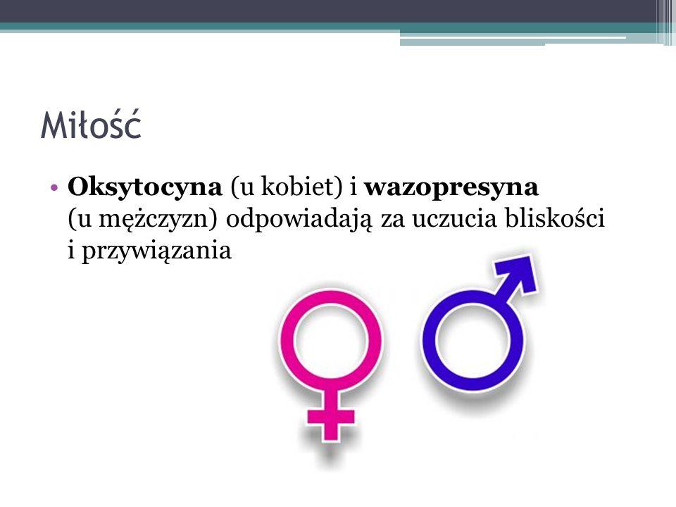 Miłość Oksytocyna (u kobiet) i wazopresyna (u mężczyzn) odpowiadają za uczucia bliskości i przywiązania