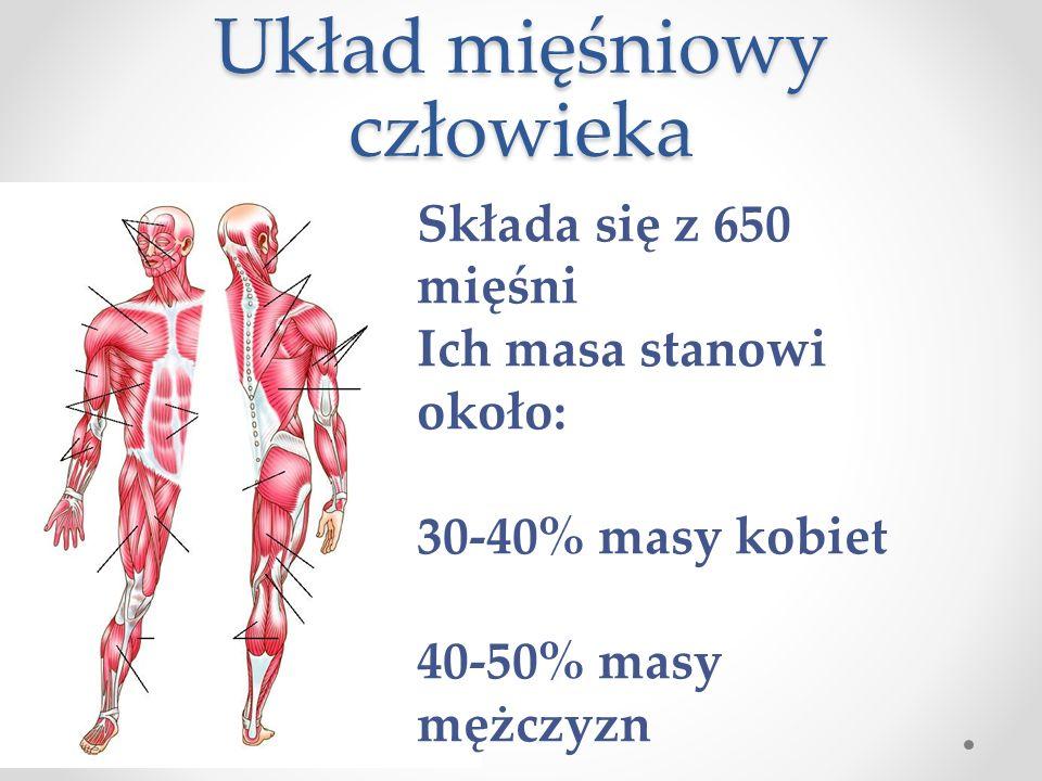 UKŁAD MIĘŚNIOWY CZŁOWIEKA Budowa mięśni szkieletowych