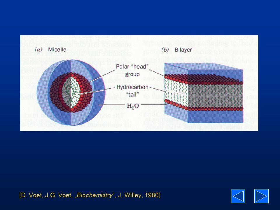 Równoważność ciśnienia i temperatury w membranach fosfolipidowych (koronen)