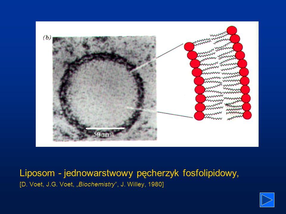 Środowisko - małe liposomy DPPC DPH Koronen Temperatura ( o C) Ciśnienie (MPa) T = 53 o C