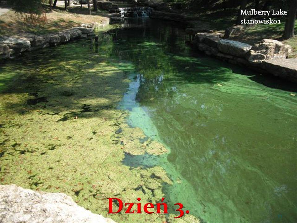 Mulberry Lake stanowisko 1 23