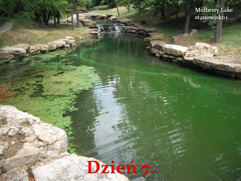 Mulberry Lake stanowisko 1 24