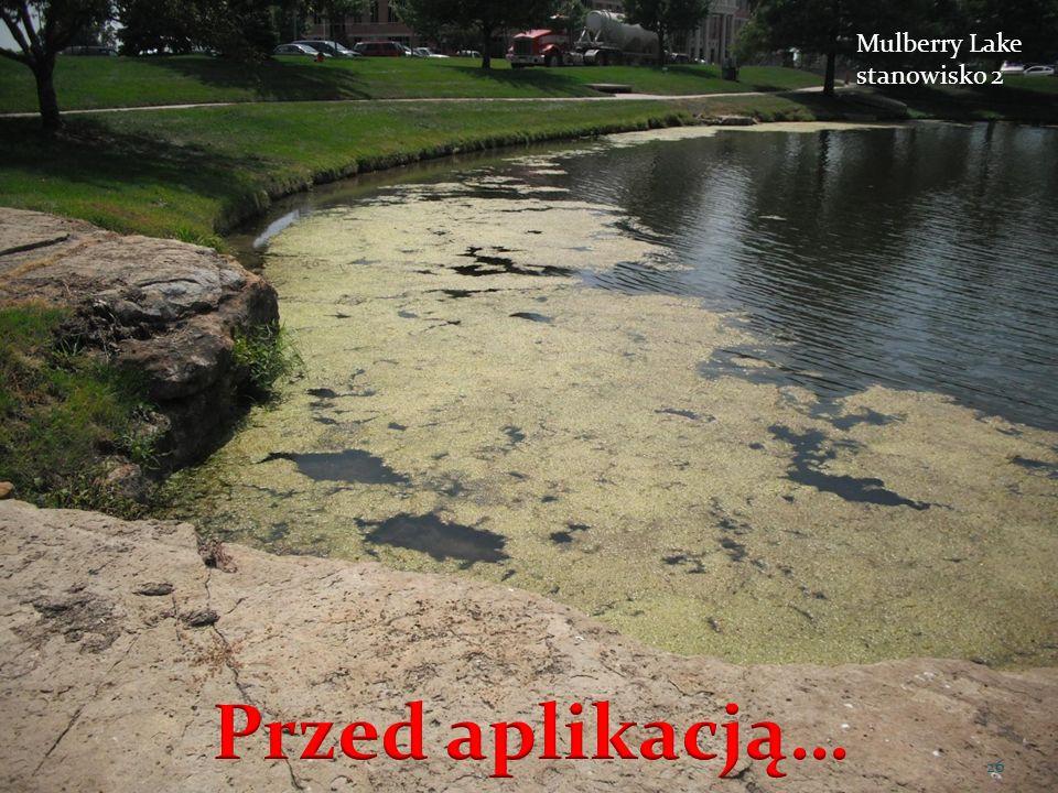 Mulberry Lake stanowisko 2 26