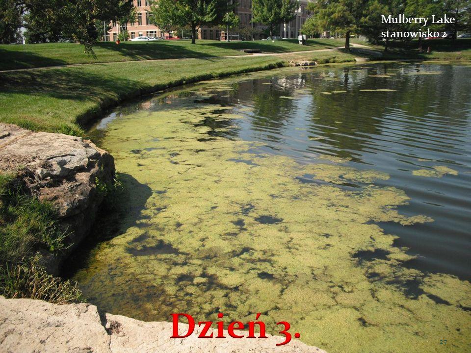 Mulberry Lake stanowisko 2 27