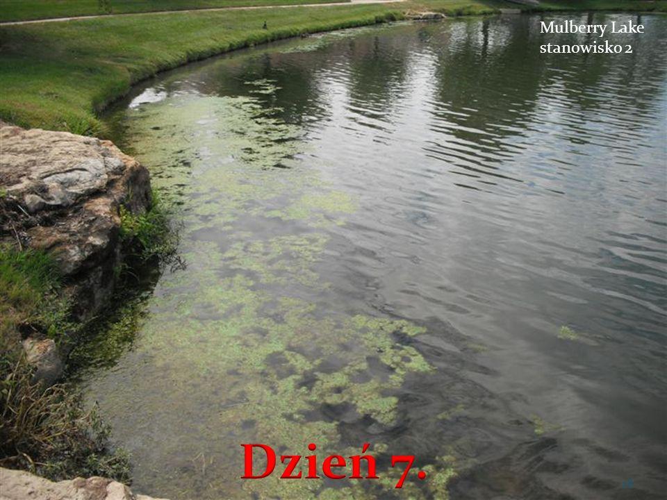 Mulberry Lake stanowisko 2 28