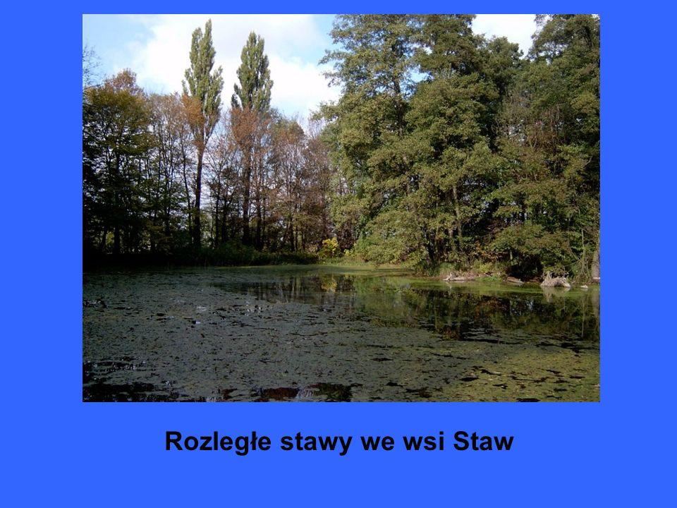 Rozległe stawy we wsi Staw