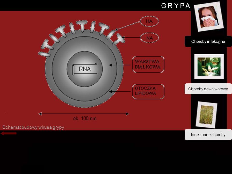 Wirus grypy G R Y P A Schemat budowy wirusa grypy Choroby infekcyjne Choroby nowotworowe Inne znane choroby