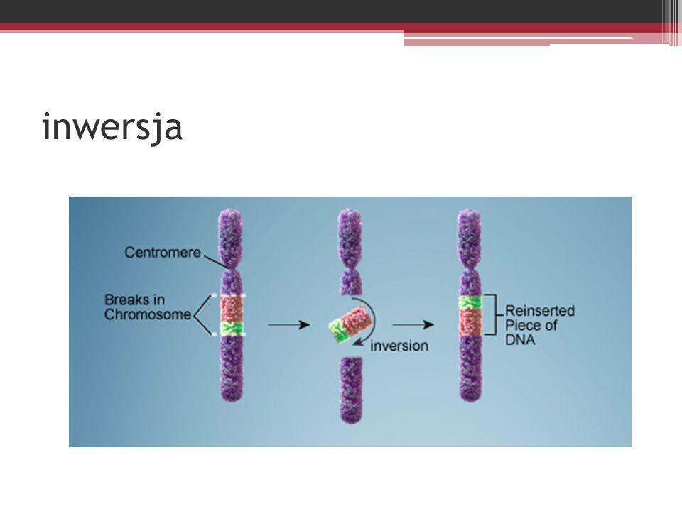 Mukowiscydoza Mukowiscydoza jest najczęściej występującą chorobą genetyczną u ludzi.