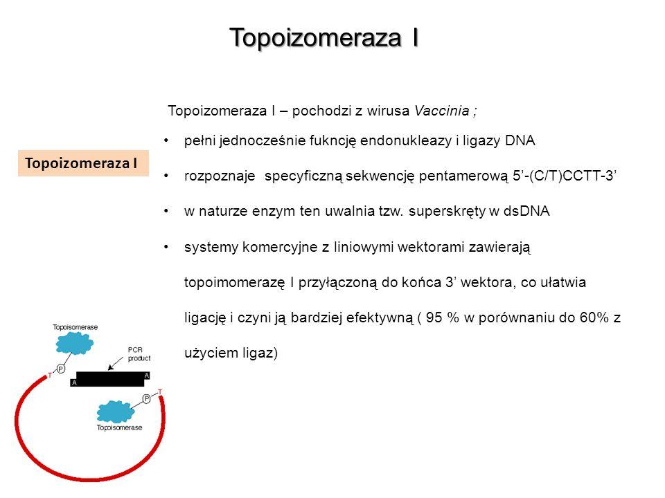 Topoizomeraza I Topoizomeraza I – pochodzi z wirusa Vaccinia ; pełni jednocześnie fukncję endonukleazy i ligazy DNA rozpoznaje specyficzną sekwencję p