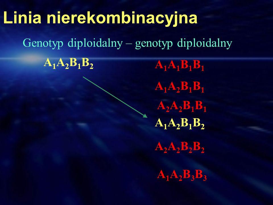 Linia nierekombinacyjna A1A2B1B2A1A2B1B2 A1A1B1B1A1A1B1B1 A1A2B1B1A1A2B1B1 A2A2B1B1A2A2B1B1 A1A2B1B2A1A2B1B2 A2A2B2B2A2A2B2B2 A1A2B3B3A1A2B3B3 Genotyp