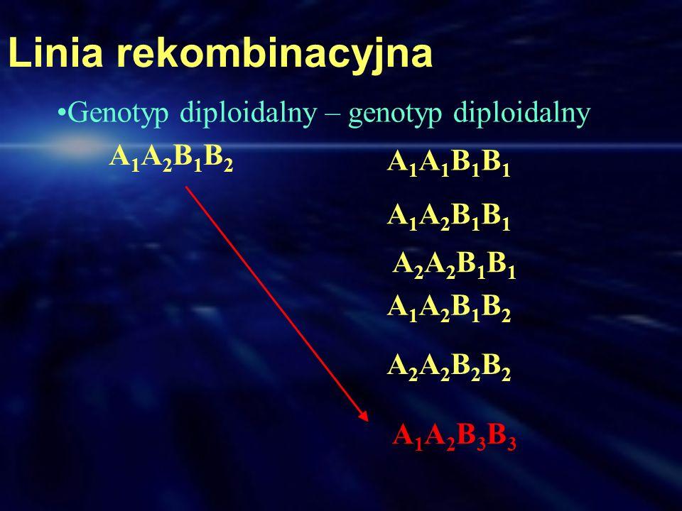 Linia rekombinacyjna A1A2B1B2A1A2B1B2 A1A1B1B1A1A1B1B1 A1A2B1B1A1A2B1B1 A2A2B1B1A2A2B1B1 A1A2B1B2A1A2B1B2 A2A2B2B2A2A2B2B2 A1A2B3B3A1A2B3B3 Genotyp di
