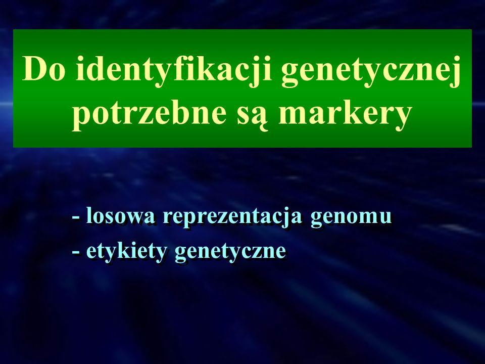 Do identyfikacji genetycznej potrzebne są markery - losowa reprezentacja genomu - etykiety genetyczne - losowa reprezentacja genomu - etykiety genetyc