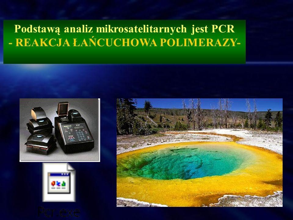 Podstawą analiz mikrosatelitarnych jest PCR - REAKCJA ŁAŃCUCHOWA POLIMERAZY-
