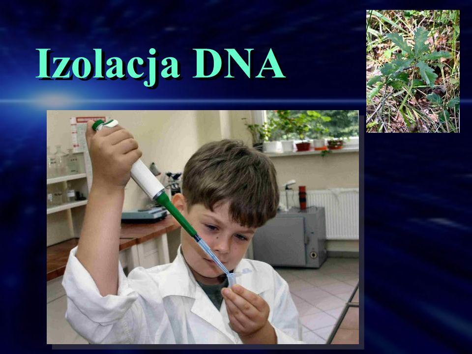 Izolacja DNA