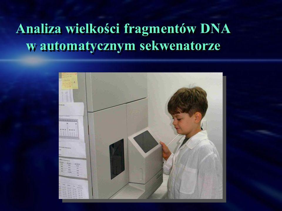 Analiza wielkości fragmentów DNA w automatycznym sekwenatorze