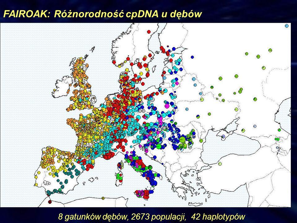 FAIROAK: Różnorodność cpDNA u dębów 8 gatunków dębów, 2673 populacji, 42 haplotypów