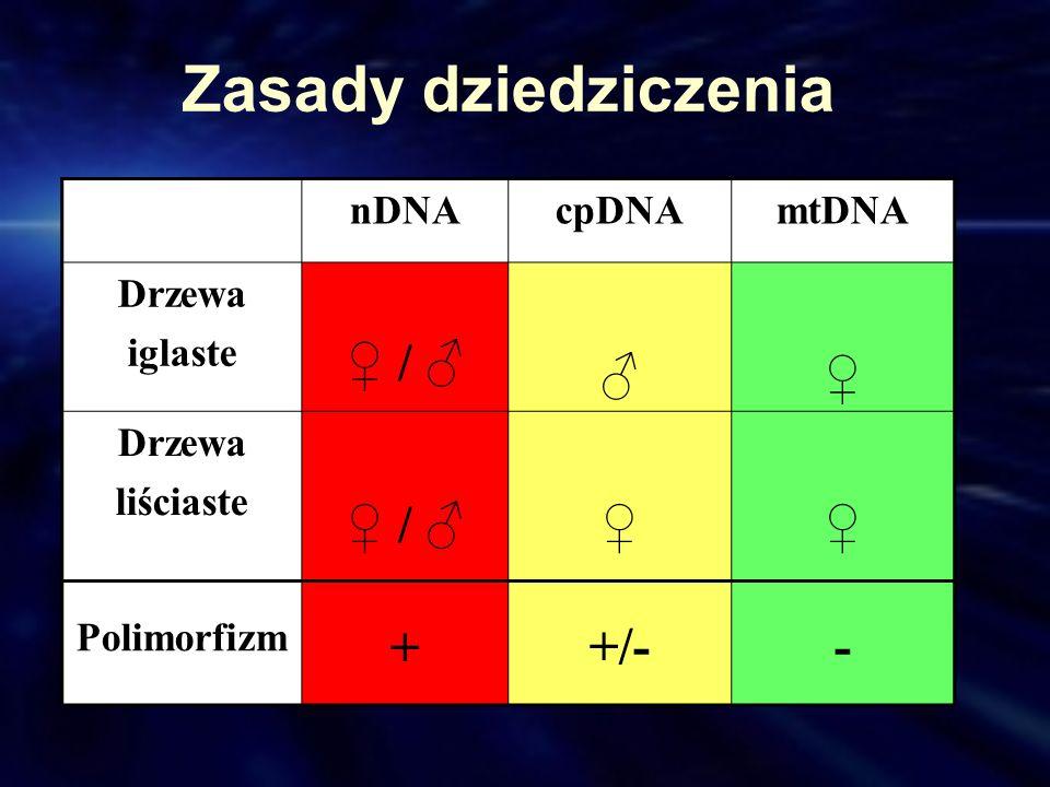 Zasady dziedziczenia nDNAcpDNAmtDNA Drzewa iglaste / Drzewa liściaste / Polimorfizm + +/--