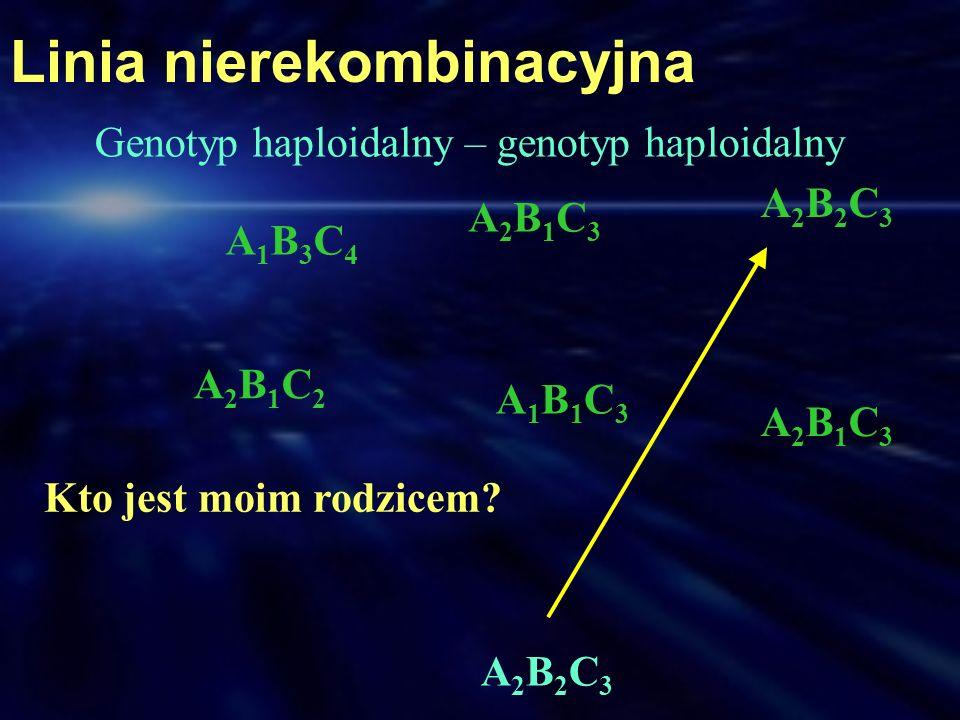 A1B3C4A1B3C4 A2B1C3A2B1C3 A1B1C3A1B1C3 A2B1C2A2B1C2 A2B1C3A2B1C3 A2B2C3A2B2C3 A2B2C3A2B2C3 Linia nierekombinacyjna Kto jest moim rodzicem? Genotyp hap