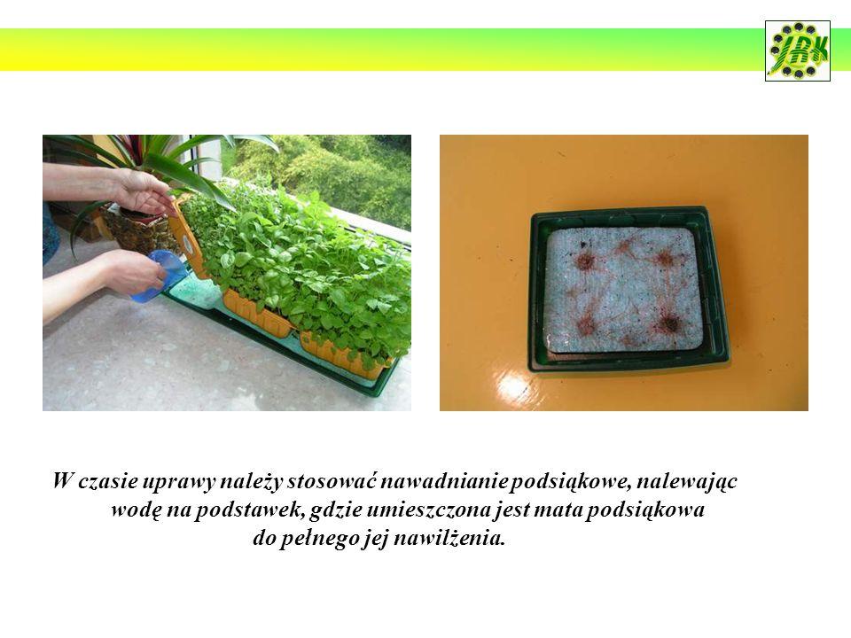 W czasie uprawy należy stosować nawadnianie podsiąkowe, nalewając wodę na podstawek, gdzie umieszczona jest mata podsiąkowa do pełnego jej nawilżenia.