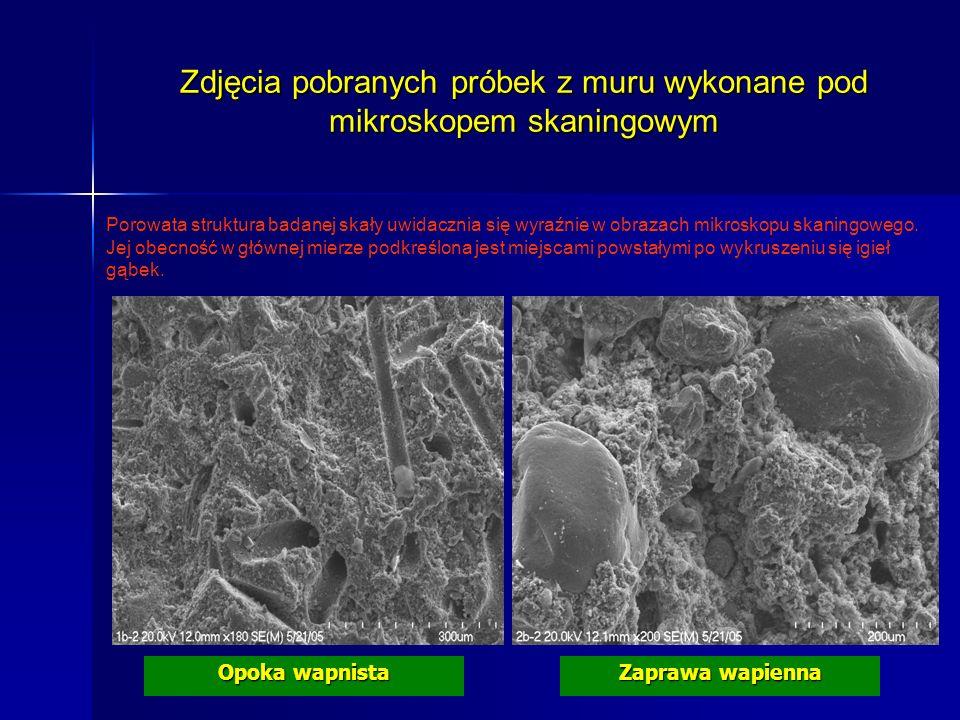 Zdjęcia pobranych próbek z muru wykonane pod mikroskopem skaningowym Zaprawa wapienna Opoka wapnista Porowata struktura badanej skały uwidacznia się w