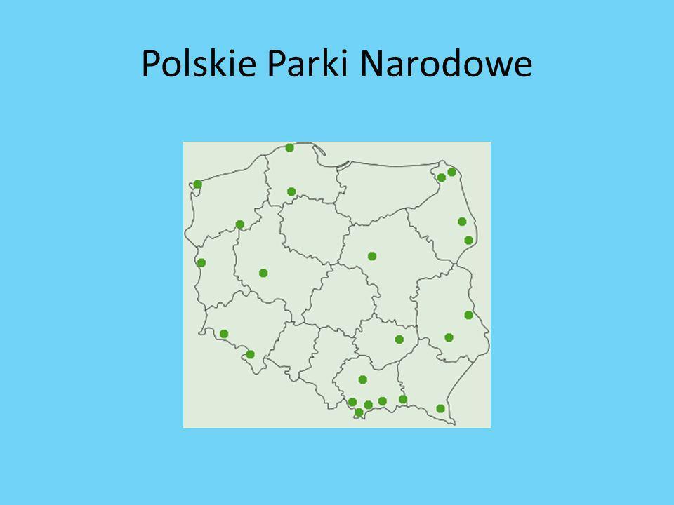 Praca z tekstem, praca w grupach- do opisu parków Praca z tekstem, praca w grupach- ustalenie zasad zachowania się w Parku Narodowym